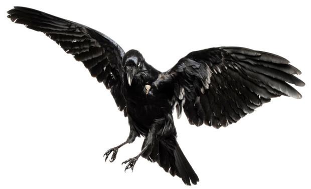 raven-paradox